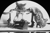 Mouse or Rat Trap, Late 19th or Early 20th Century Photographic Print