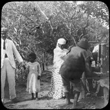 Grinding Sugar Cane, Brazil, Late 19th or Early 20th Century Photographic Print