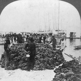 Sponge Market, Key West Harbour, Florida, USA, C1900 Photographic Print