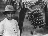 Boy with Bananas Growing on a Tree, Tenerife, Canary Islands, Spain, C1920S-C1930S Photographic Print