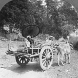 Family Journeying Through the Jungle Near Mingun, Burma, 1908 Photographic Print