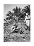 Planting Coconuts, Solomon Island, Fiji, 1905 Giclee Print