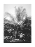 Making Copra, Solomon Islands, Fiji, 1905 Giclee Print