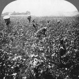 A Cotton Plantation, Rome, Georgia, USA, 1898 Photographic Print by BL Singley