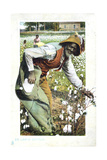 Picking Cotton, USA, Postcard, C1900 Giclee Print