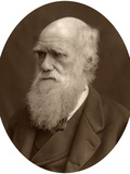 Charles Darwin, 1878 Photographic Print by  Lock & Whitfield