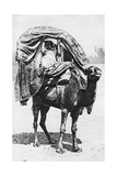 A Girl on a Camel Litter, Algeria, 1922 Giclee Print by  Crete