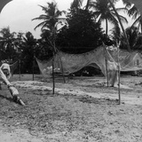 Fishermen Drying their Nets on the Beach, Basseterre, St Christopher, West Indies Photographic Print by HC White