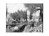 The Garden of Gethsemane, Palestine, Late 19th Century Giclee Print by John L Stoddard
