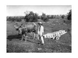 Native Cart in Manila, Philippines, 1908-1909 Giclee Print by Homer L Knight