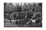 Goat Farming in Dalarna, Sweden, 1908-1909 Giclee Print by Wald Zachrisson
