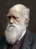 Charles Darwin, British Naturalist, 1878 Fotodruck von  Lock & Whitfield