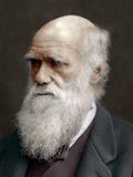 Charles Darwin, British Naturalist, 1878 Photographic Print by  Lock & Whitfield