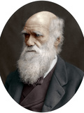 Charles Darwin, British Naturalist, 1878 Photographic Print by  Lock & Whitfield