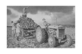 Women's Land Army Lifting a Crop, World War II, 1940 Giclee Print