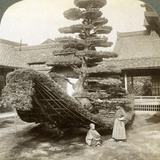 A Single Pine Trained into the Shape of a Boat, Kinkaku-Ji Monastery, Kyoto, Japan, 1904 Photographic Print by  Underwood & Underwood