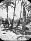 General Gordon's Garden, Khartoum, Sudan, C1890 Fotografisk tryk af Newton & Co