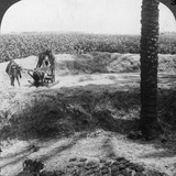 Threshing in Egypt, 1905 Photographic Print by  Underwood & Underwood