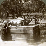 Devout Woman Stroking a Bronze Bull to Cure Rheumatism, Kitano Tenjin Temple, Kyoto, Japan, 1904 Photographic Print