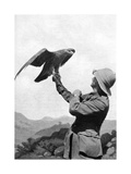 A British Officer with a Tamed Golden Eagle, Salonika, Greece, First World War, 1914-1918 Giclee Print