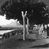 The Road to the Pyramids, Giza, Egypt, 1905 Photographic Print