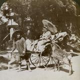 Girl Feeding Sacred Deer on Her Way to Prayers, Grounds of Kasuga Temple, Nara, Japan, 1904 Photographic Print