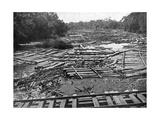 Cedar Logs on the Tebicuary-Guazu River Floating by the Railway Bridge, Paraguay, 1911 Giclee Print