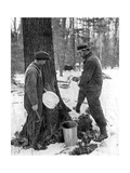 Tapping for Maple Syrup, Canada, 1936 Giclee Print