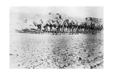 Camel Train, Mosul, Mesopotamia, 1918 Giclee Print
