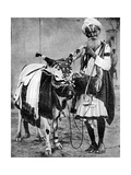 Hindu Cow with Sacred Cow, India, 1936 Giclee Print