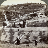 The Garden of Gethsemane and the Mount of Olives, Palestine, 1908 Photographic Print