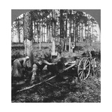 In a Great Pine Forest, Collecting Turpentine, North Carolina, USA, Late 19th or Early 20th Century Giclee Print