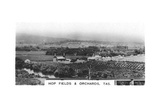 Hop Fields and Orchards, Tasmania, Australia, 1928 Giclee Print