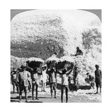 Men Carrying Baskets of Cotton at an Indore Cotton Mill, India, 1900s Giclee Print