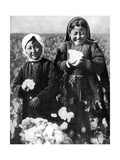 Girls in a Cotton Field, Kazakhstan, 1936 Giclee Print