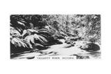 Taggerty River, Victoria, Australia, 1928 Giclee Print