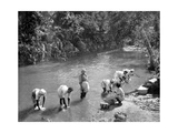 Women Washing Clothes in the River, Port Antonio, Jamaica, C1905 Giclee Print by Adolphe & Son Duperly