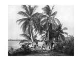 On the Road to Blue Hole, Port Antonio, Jamaica, C1905 Giclee Print by Adolphe & Son Duperly
