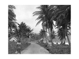 Coconut Grove, Port Antonio, Jamaica, C1905 Giclee Print by Adolphe & Son Duperly