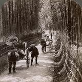 Bamboo Avenue, Looking South-West, Near Kiyomizu, Kyoto, Japan, 1904 Photographic Print