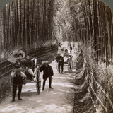 Bamboo Avenue, Looking South-West, Near Kiyomizu, Kyoto, Japan, 1904 Photographic Print by  Underwood & Underwood