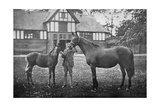 Lily Agnes, with Orelio by Bend Or, Winner of £4955, 1894 Giclee Print