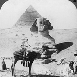 The Great Sphinx of Giza, Egypt, 1905 Photographic Print by  Underwood & Underwood