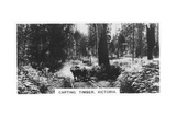 Carting Timber, Victoria, Australia, 1928 Giclee Print