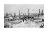 Blasted Tree Stumps, Mesnil, Champagne, France, World War I, 1915 Giclee Print
