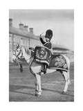 Plum Duff, the Drum-Horse of the Royal Scots Greys, 1896 Giclee Print by  Gregory & Co