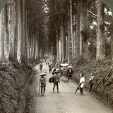 The Groves Were God's First Temples, Avenue of Noble Cryptomerias at Nikko, Japan, 1904 Photographic Print by  Underwood & Underwood