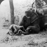 Mahout Removing a Thorn from an Elephant's Foot, Behar Tiger Shoot, India, C1900s Photographic Print by  Underwood & Underwood