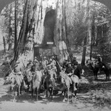 Cavalry Passing Through the Great Tree 'California, California, Usa Photographic Print by  Underwood & Underwood