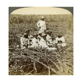 On 'La Union' Sugar Plantation, San Luis, Santiago Province, Cuba, 1899 Giclee Print by  Underwood & Underwood